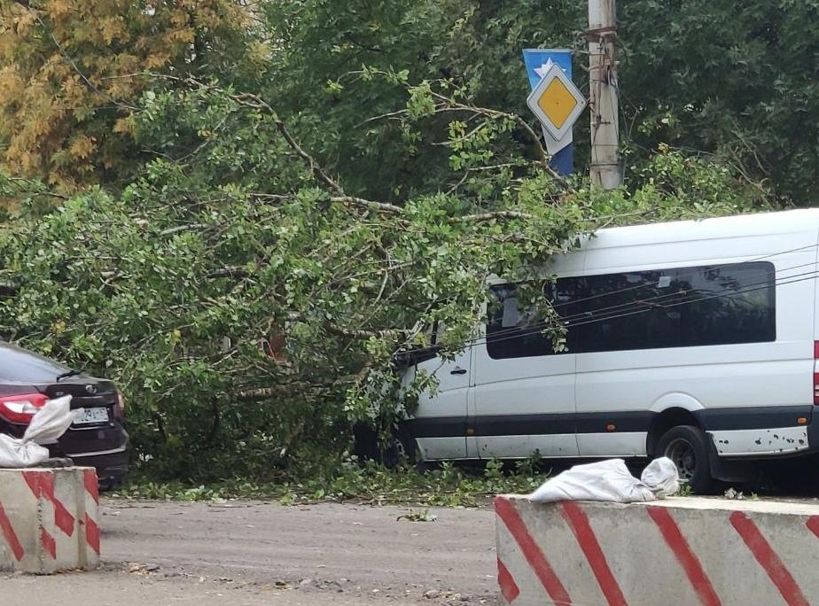 19 сентября в Смоленской области будет холодно и ветрено